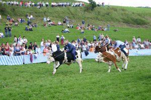 Foto Ochsenrennen Haunshofen 2005
