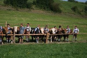 Foto Ochsenrennen Haunshofen 2009